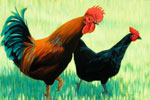 Red Rooster, Black Hen