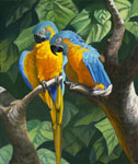 Blue Throat Macaws