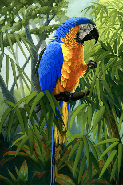Blue and Gold Macaw (triptych left panel)