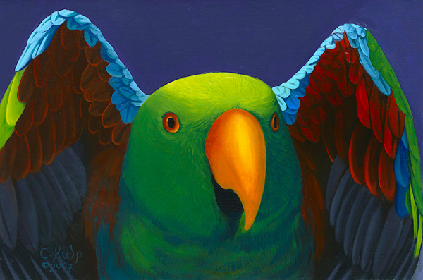 Eclectus with Wings