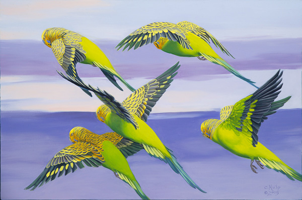 Flying Budgerigars