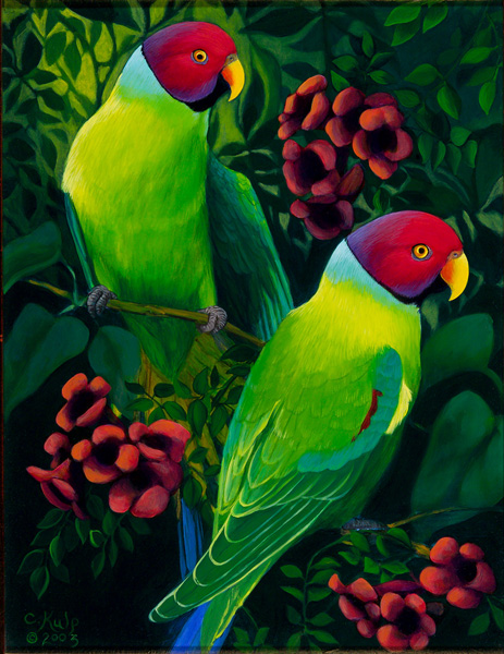 Plum Headed Parakeets