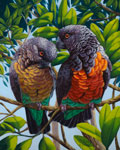 Red Bellied Parrots
