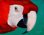 Scarlet Macaw Watching